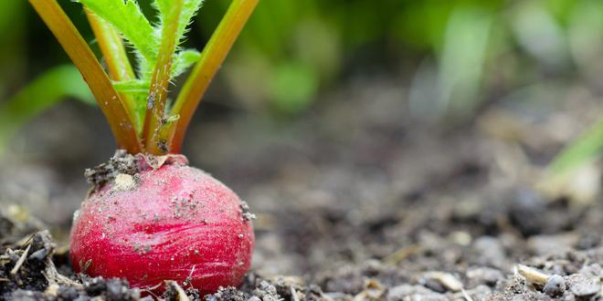 Grow Your Own Take-away