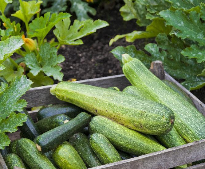 Business Set To Boom For Local Organic Veg Team