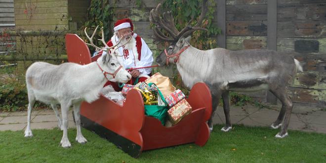 Festive fun at the Llama Park