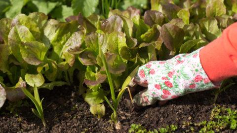 Creating A Kitchen Garden From Scratch