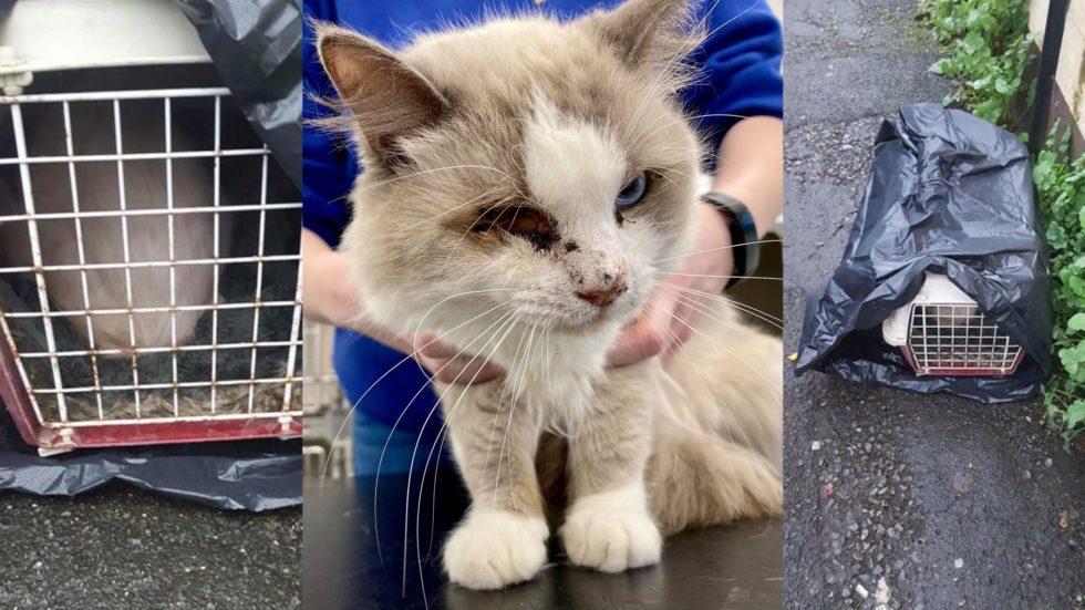 Cat With Missing Eye Dumped In Bin Bag