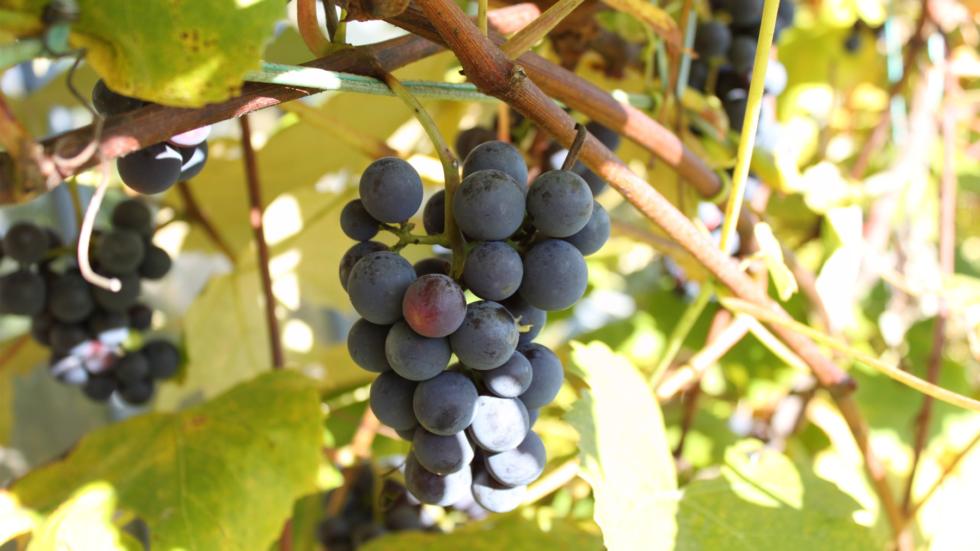 Getting Fruity