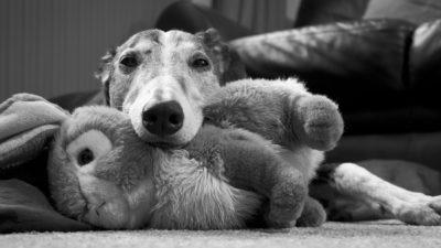 Greyhound Trust