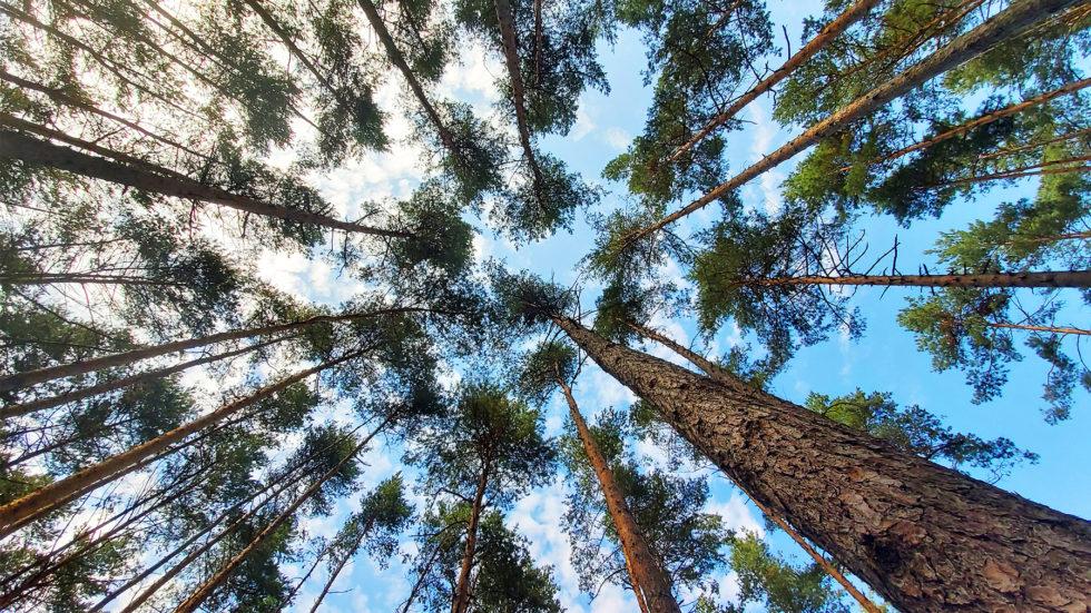 Haywards Heath Town Council Installs Carbon Calculators